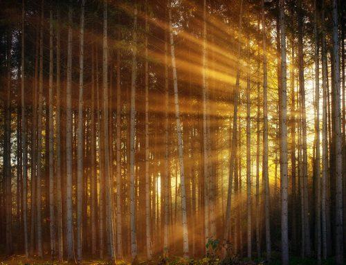 Los tres pilares del plan de choque de la luz